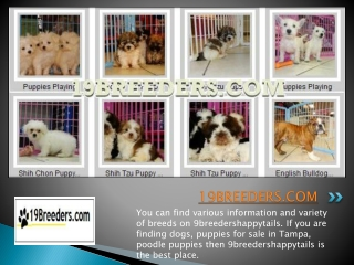 19Breeders Reviews- Choosing the Right Puppy For you