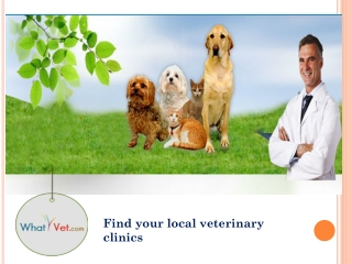 Using Online Service to Find the Local Veterinary Clinics