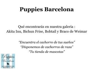 Puppies Bcn: imágenes 1