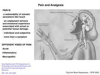 Pain and Analgesia
