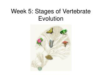 Week 5: Stages of Vertebrate Evolution