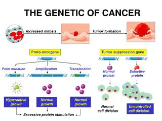 THE GENETIC OF CANCER