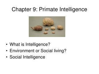 Chapter 9: Primate Intelligence