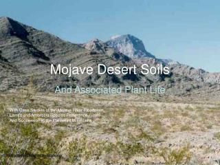 Mojave Desert Soils