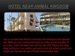 hotel near animal kingdom