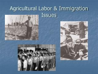 Agricultural Labor  Immigration Issues