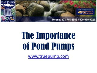 The Importance of Pond Pumps