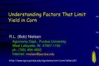 Understanding Factors That Limit Yield in Corn