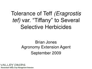 Tolerance of Teff Eragrostis tef var.