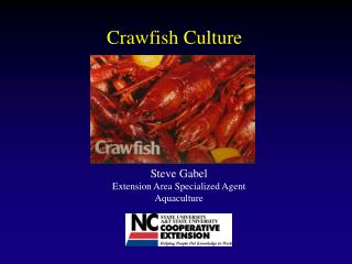 Crawfish Culture
