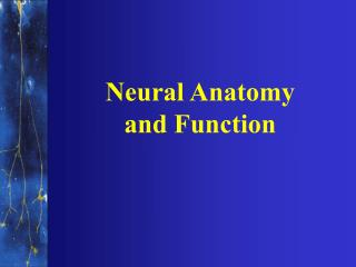 Neural Anatomy and Function