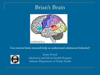 Brian s Brain         Can current brain research help us understand adolescent behavior  Sandy Powell Adolescent and Sch