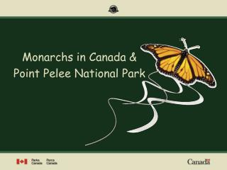 Monarchs in Canada  Point Pelee National Park