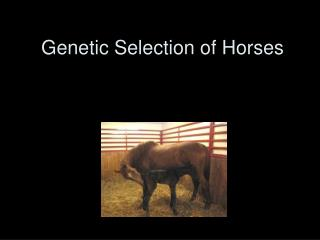 Genetic Selection of Horses