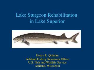 Lake Sturgeon Rehabilitation  in Lake Superior