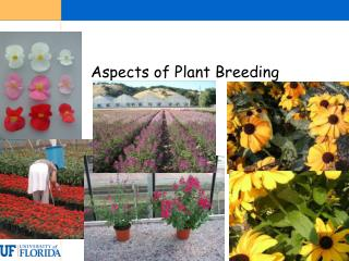 Aspects of Plant Breeding The plant breeding industry