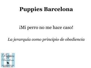 Puppies Bcn: La obediencia de tu perro