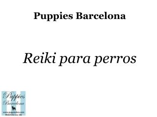 Puppies Bcn: reiki para perros