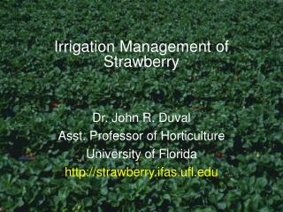 Irrigation Management of Strawberry