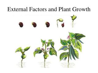 External Factors and Plant Growth