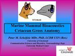 Marine Mammal Bioacoustics Cetacean Gross Anatomy