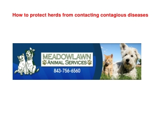 How to protect herds from contacting contagious diseases