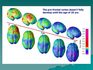 A Guided Tour of the Adolescent Brain