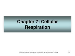 chapter 7: cellular respiration