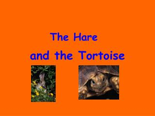 And the Tortoise