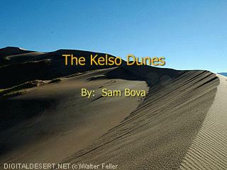 The Kelso Dunes