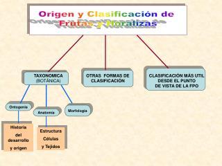 Origen y Clasificaci n de  Frutas y Horalizas