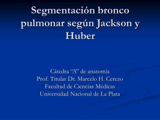 Segmentaci n bronco pulmonar seg n Jackson y Huber