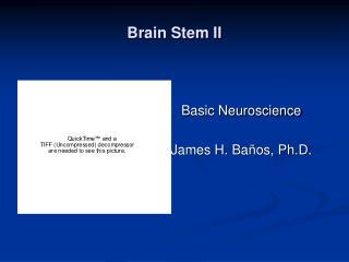 Brain Stem II