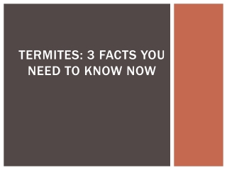Termites: 3 Facts You Need to Know Now