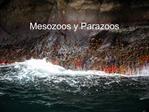 Mesozoos y Parazoos