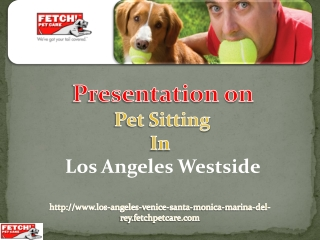 Pet Care Services- A Way to Stay Worry Free