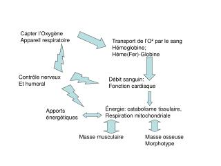 Capter l Oxyg ne Appareil respiratoire