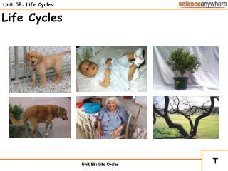 Unit 5B: Life Cycles