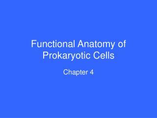 Functional Anatomy of Prokaryotic Cells