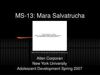 MS-13: Mara Salvatrucha