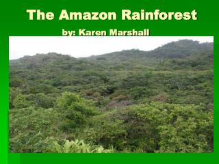 The Amazon Rainforest            by: Karen Marshall