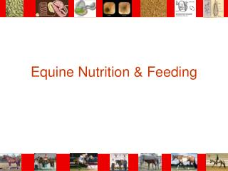 Equine Nutrition  Feeding