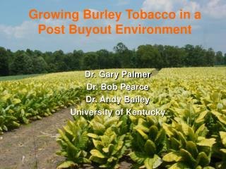 Growing Burley Tobacco in a Post Buyout Environment