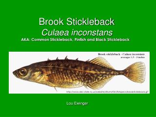 Brook Stickleback Culaea inconstans