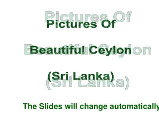 Pictures Of  Beautiful Ceylon  Sri Lanka