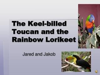 The Keel-billed Toucan and the Rainbow Lorikeet