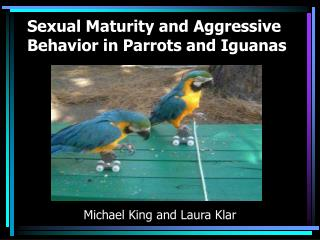 Sexual Maturity and Aggressive Behavior in Parrots and Iguanas