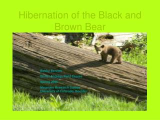 Hibernation of the Black and Brown Bear