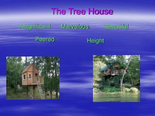 The Tree House Magnificent Marvelous Beautiful Peered Height