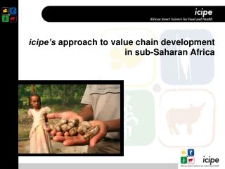 Icipe s approach to value chain development in sub-Saharan Africa